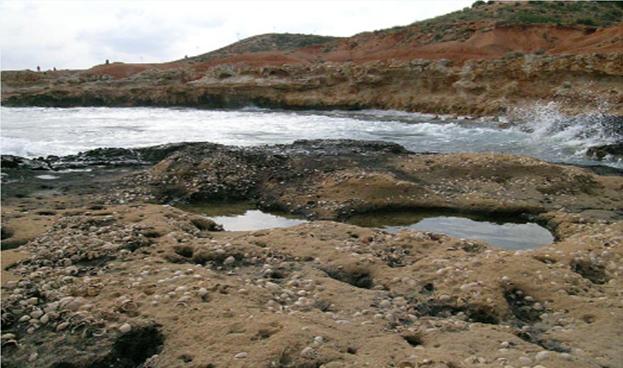 Fósiles en la Playa fósil de Cabo Roig